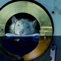 Ue, infrazioni all'Italia: lenta nelle scorie nucleari e troppi limiti per i test sugli...