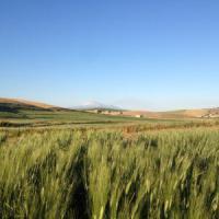 La rivoluzione dei contadini siciliani, 3.000 ettari di grani antichi contro le ...