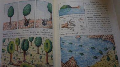 La nuova vita del Codex Seraphinianus  il libro più strano del mondo /   Le immagini