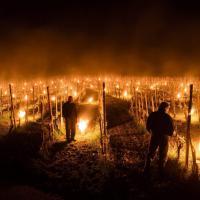 Svizzera, candele per riscaldare l'uva: il rimedio è suggestivo
