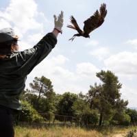 Formichella, tra aquile e caprioli: il rifugio per gli animali feriti sul monte Peglia