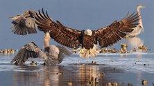 Premio Audubon    le migliori foto di uccelli