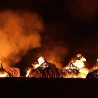 Kenya, guerra ai bracconieri: bruciate 100 tonnellate di avorio