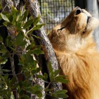 Sudafrica, dalle gabbie alla riserva: stretching ed esplorazioni nella nuova casa