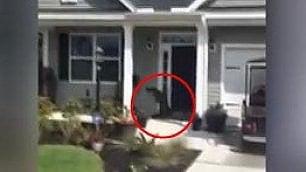 La visita più inattesa: un alligatore alla porta e suona il campanello