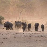 Lo Zimbabwe vende gli animali selvatici per la siccità