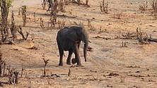 Africa, animali in vendita Parchi: colpa della siccità