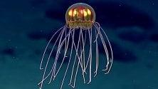 Una medusa bioluminescente nella Fossa delle Marianne