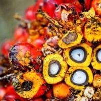 """""""L'olio di palma fa male soprattutto ai bambini"""": la conferma nel dossier dell'Efsa"""