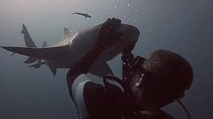Lo squalo che ama le coccole Il sub: 'Incredibile, mi riconosce'