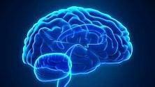 """Nel cervello """"l'archivista"""" della memoria"""