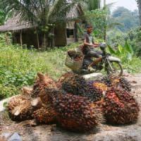 """L'allarme Efsa sull'olio di palma. Le aziende: """"Faremo le scelte giuste per tutelare i..."""