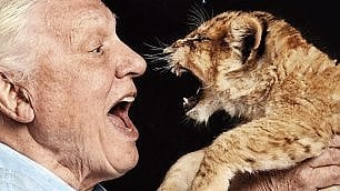 Attenborough in posa con i leoni Il grande naturalista sotto accusa