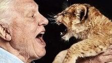 Attenborough e i leoni ma la posa non piace