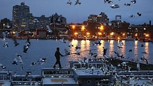 Luci volanti sulla Grande Mela 2mila piccioni illuminano NY
