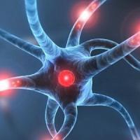 Trovato nel cervello 'l'archivista' della memoria