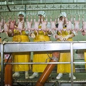 Usa, i big del pollo negano la pausa pipì e i dipendenti mettono il pannolone