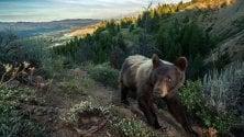 Interattivo: Yellowstone  dal punto di vista di un orso