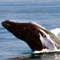 Wwf: difendere la biodiversità è un affare