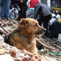 Sisma L'Aquila: addio a Pluto 'ju cane', simbolo della città