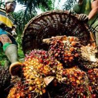 Olio di palma nei cibi per bambini. Dall'oliva al girasole, le alternative possibili