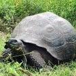 Specie scoperte nel 2015   la top ten: auguri Linneo