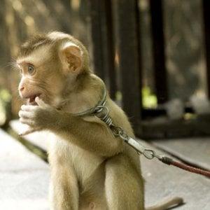 ''Promuove turismo crudele'', TripAdvisor accusata dagli animalisti