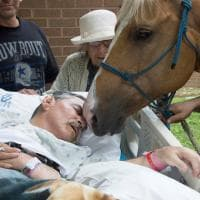 Stati Uniti, l'ultimo desiderio del veterano: abbracciare i suoi cavalli