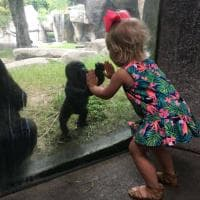 Usa, incontro tra cuccioli: il saluto del gorilla alla bimba è commovente