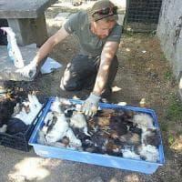 Strage di animali a Sos Natura. L'Istituto zooprofilattico:
