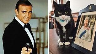 """Accuse al gatto del ministro """"Spia della Commissione Ue"""""""