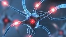 Pochi flessibili neuroni: così il cervello ci aiuta a scegliere  di ELISA MANACORDA