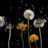 Allergie stagionali, come gestire il