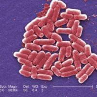 Allarme negli Usa, donna colpita da batterio resistente a tutti gli antibiotici