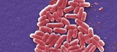 Usa, donna colpita da batterio  resistente a tutti gli antibiotici