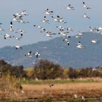 Domenica natura: porte aperte nelle oasi Wwf