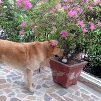 Marò: bloccato in India Argo, il cane di Girone
