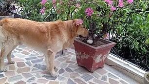 Marò: bloccato in India Argo Girone parte senza il suo cane