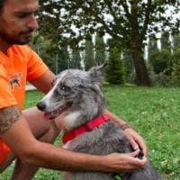I consigli per il cane runner: dai comandi allo stretching