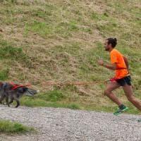 Sei zampe motrici: imparare a correre con il cane