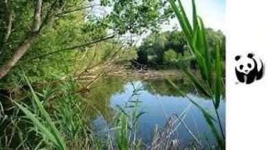 Porte aperte nelle oasi del Wwf 50 anni fa dopo la prima sull'Argentario