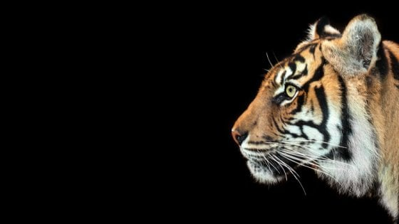 Onu: serve azione urgente contro il traffico di animali