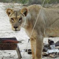 Wwf: crimini contro la natura, un fatturato annuo di 213 miliardi di dollari