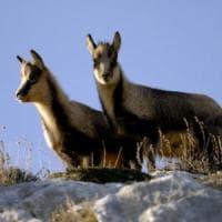 Fauna italiana tra segnali di speranza e specie ad alto rischio