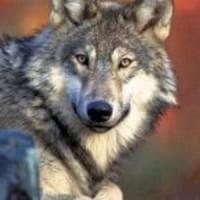 Specie salvate dall'estinzione, cinque storie italiane