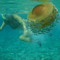 Prepariamoci a convivere con le meduse, ne vedremo molte più del solito