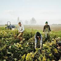Global warming: scienza in campo per salvare i campi