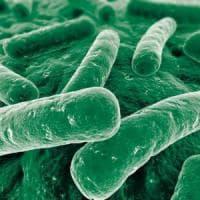 Un cervello microbico, nuova frontiera per cure neurologiche