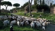 L'Appia Antica ritrovata in viaggio con Paolo Rumiz