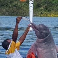 Torcia a Rio 2016, ci pensa il delfino rosa delle Amazzoni